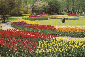 Flowers Tulips Holland In Flower Decoration 1974