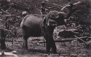 Ceylon Sri Lanka Tame Elephant Clearing Jungle Real Photo