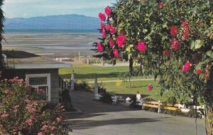 Beautiful floral scenery Sandy Beach of Parksville,  B.C.,  Canada,  PU_40-60s