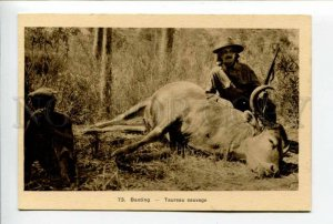 424029 VIETNAM Wild Bull hunting Vintage SAIGON postcard