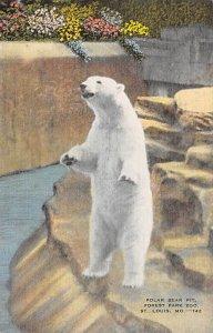 Zoos Polar Bear Pit, Forest Park Zoo St Louis, Missouri, USA Unused