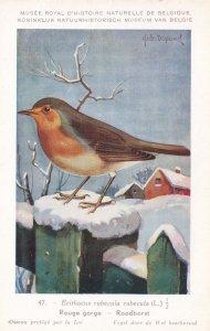 European Robin Erithacus Rubecula Bird Antique Rare Postcard