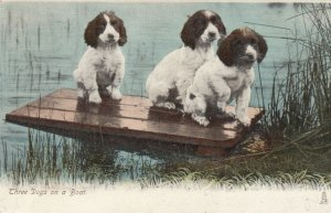 Three Dogs on a boat, PU-1905; TUCK Animal Life 1417