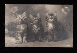 012446 Charming KITTENS Tabby Vintage ROTARY PHOTO 753-2