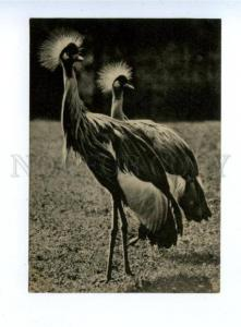 159730 Moscow ZOO Crowned Crane Vintage Russian PC