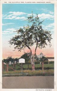 The Old Apple Tree, Planted 1826, VANCOUVER, Washington, 1910-1920s