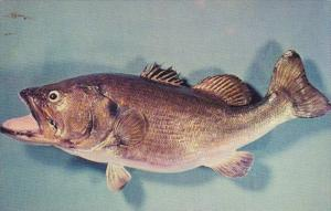 Fish Florida Largemouth Bass