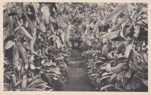 KEW , UK , 00-10s ; Royal Botanic Gardens
