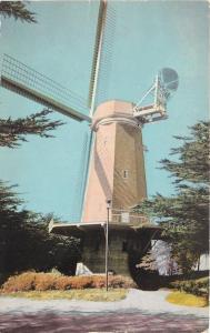 San Francisco California~Golden Gate Park~Murphy Windmill~1950s Postcard
