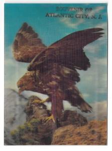 3D Lenticular Hawk Bird of Prey Souvenir Atlantic City NJ