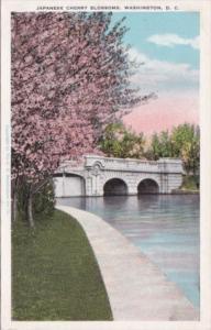 Japanese Cherry Blossoms Washington D C