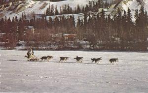 Dog Team , Sourdough Rendezvous , Whitehorse , Y.T. , Canada , 40-60s