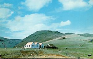 Iceland Farmhouse Near Geysir
