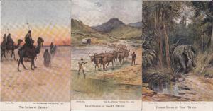 Africa sceneries vintage artist postcards buffaloes elephant Sahara desert x 3