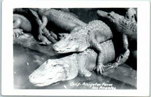 1950s Los Angeles CA RPPC Real Photo Postcard California Alligator Farm Unused