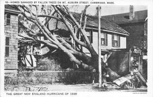 Massachusetts Cambridge   Hurricane of 1938  Homes damaged by fallen trees