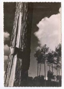 RP   Visage des Landes  23-Couchant, France, 40-50s