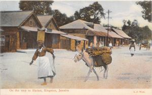 Woman & Donkey On Way To Market Kingston Jamaica 1910c postcard