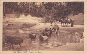 Camels & Donkeys, Passage De l´Oued, Touggourt, Algeria, Africa, 1900-1910s