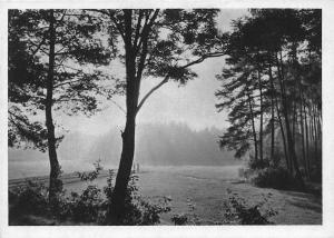 Wald Forest Mist Trees Landscape