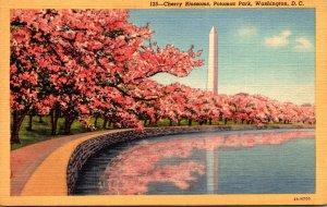 Washington D C Potomac Park At Cherry Blossom Time Curteich