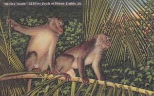Florida Miami Monkey Jungle 22 Miles South Of Miami