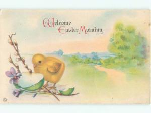 Divided-Back EASTER CHICK SCENE Cute Postcard AA0766