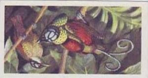 Brooke Bond Tea Vintage Cigarette Card Tropical Birds 1961 No 50 Wilson's Bir...