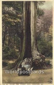 Big Hollow Tree, Stanley Park Vancouver British Columbia, Canada Unused