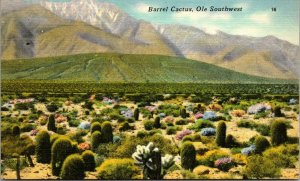 Postcard Barrel Cactus on the desert SOUTHWEST - VINTAGE