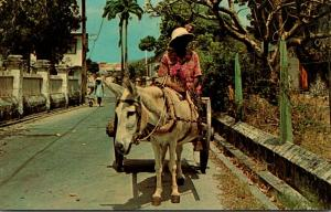 Barbados Donkey Cart Vendor
