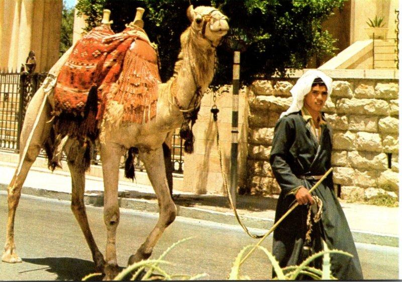 Israel Jerusalem Old City Street Scene With Camel and Handler