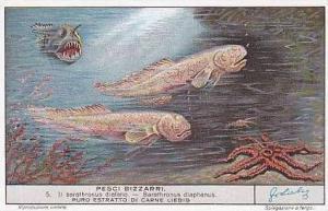 Liebig Vintage Trade Card 1941 Bizarre Fish S1433 No 5 Barathronus Diaphanus