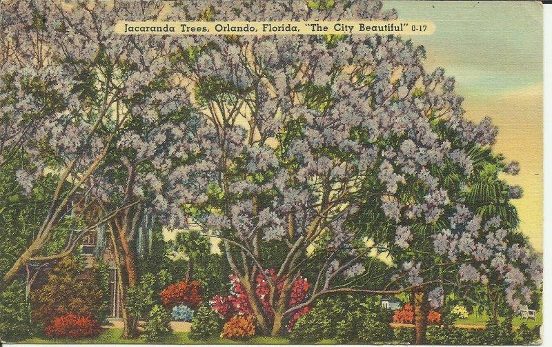 Jacaranda Trees, Orlando, Florida, The City Beautiful