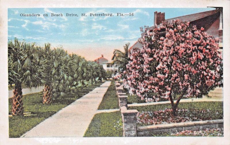 ST PETERSBURG FL OLEANDERS ON BEACH DRIVE POSTCARD c1920s