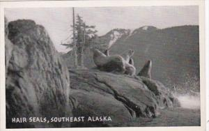 Alaska Hair Seals Southeast Alaska