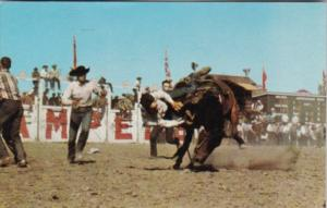 Bucking Horse Cowboy Heading For A Fall 1964