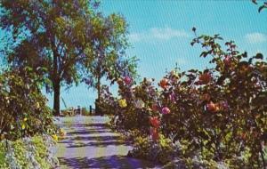 Indiana Valparaiso Strongbow Turkey Farm & Inn Rose Garden