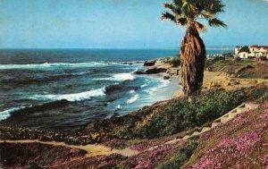 Beautiful California Shoreline Beach Palm Tree 1959 Chrome Vintage Postcard