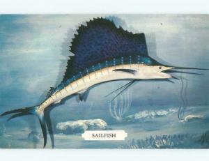 Pre-1980 SAILFISH ON POSTCARD - DEEP-SEA FISHING Published In Miami FL E5668