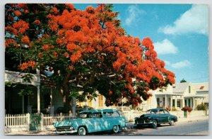 Key West Florida~1950s Station Wagon Under Flowering Royal Poinciana Tree~Homes