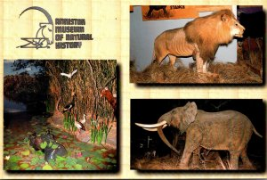 Alabama Anniston Museum Of Natural History