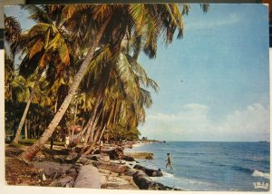 Kenya Coco nuts Palms on the Beach - posted 1973