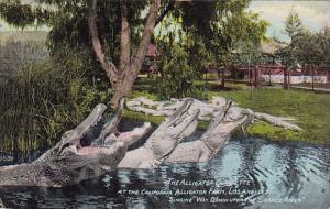The Alligator Quartette At The California Alligator Farm Los Angeles Californ...