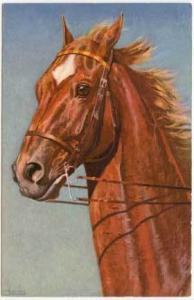 Beautiful Signed Chretian Horse Postcard