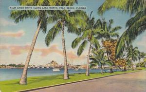 Florida Palm Beach Palm Lined Drive Along Lake Worth 1941