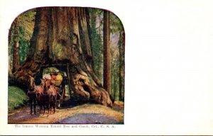 California Mariposa Grove The Famous Wawona Tunnel Tree and Coach