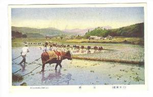 Rice Transplanting , Japan , 00-10s