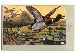 127980 HUNT Flying DUCK Vintage Colorful PC