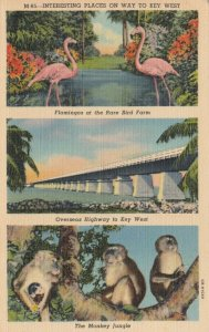 Interesting Places on Way To KEY WEST, Florida, 1930-40s; Flamingoes at Rare Bir